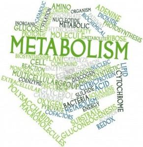 मेटाबोलिज्म या चयापचय क्या है और कैसे