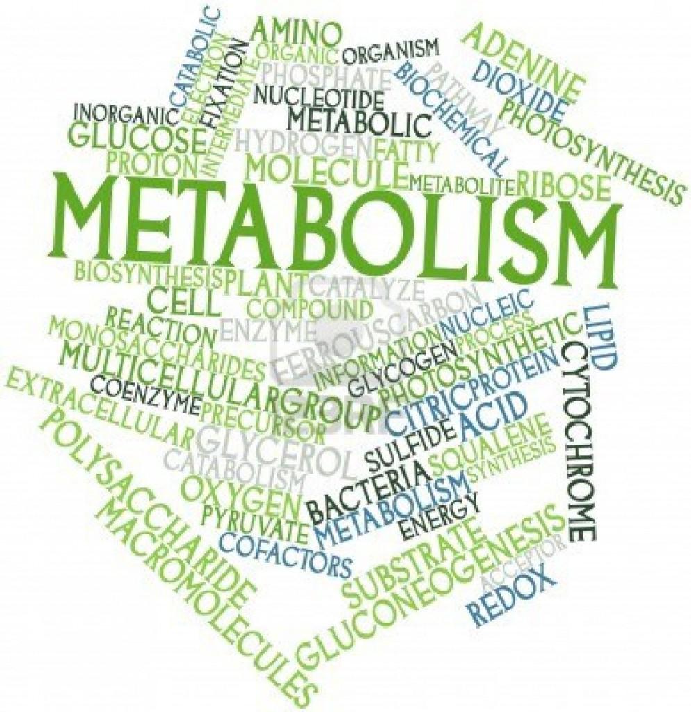 Metabolism in Hindi