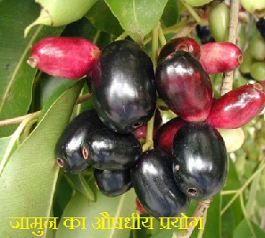 जामुन के फायदे | Jamun fruit leaf seed sirka benefits in ...