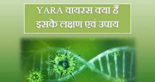 Yara Virus Symptoms, Treatment, Origin In Hindi]