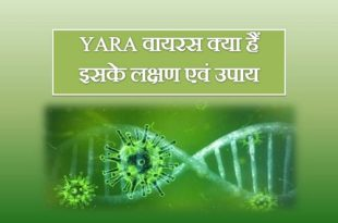 Yara Virus Symptoms, Treatment, Origin In Hindi]