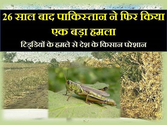 tiddi dal hamla locust attack rajasthan in hindi
