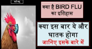 Bird-Flu-Kya-hain-Essay-In-Hindi